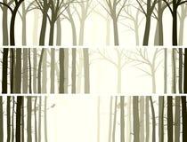 Horizontal banner with many tree trunks. Stock Photos
