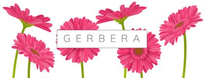 Horizontal banner with pink gerbera daisy flowers. Horizontal banner decoration with pink gerbera daisy flowers and text frame. Vector illustration for spring Stock Photography