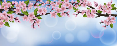 Horizontal banner with realistic cherry tree with flowers and leaves. Horizontal spring banner with realistic cherry tree branch, pink flowers and green leaves Stock Images