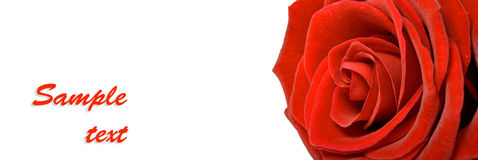 Horizontal banner with rose and lots of copyspace Royalty Free Stock Image