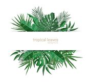 Horizontal banner template decorated with green foliage of tropical paradise plants or green exotic palm leaves. Elegant royalty free illustration
