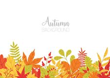 Horizontal banner with various colorful autumn tree leaves at bottom edge and place for text on white background Stock Photo