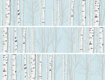 Horizontal banners of birch trunks forest. Stock Photos