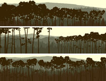 Horizontal banners of coniferous pinewood. Royalty Free Stock Photos
