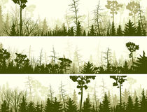 Horizontal banners of coniferous wood. Set vector horizontal banners of coniferous treetops forest (pine, spruce, cedar Royalty Free Stock Photography