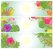 Horizontal banners with exotic flowers Stock Photos