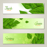 Horizontal banners with green leaves Royalty Free Stock Photography