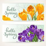 Horizontal banners Hello spring with yellow and purple crocuses Stock Photography