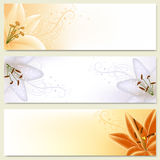Horizontal banners with lilies Stock Image