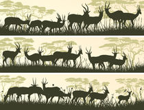 Horizontal banners of wild antelope in African savanna. Stock Image