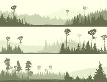 Horizontal banners of wild coniferous wood with glade. Set horizontal banners of wild coniferous forest with glade vector illustration