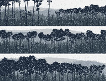 Horizontal banners of winter coniferous pinewood. Royalty Free Stock Photo