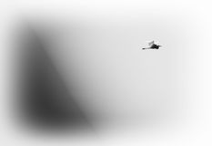 Horizontal black and white ardea in flight on blue gradient back Royalty Free Stock Photos