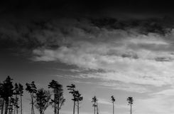 Horizontal black and white landscape forest silhouette Stock Photography