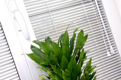 Horizontal blinds Royalty Free Stock Image