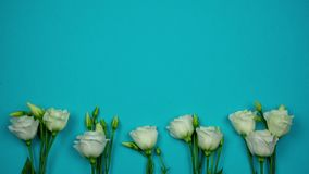 Horizontal blue banner with white roses and place for text. Stop motion animation.  stock video