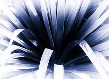 Horizontal blueish sepia plant bokeh memories postcard backgroun Stock Photos