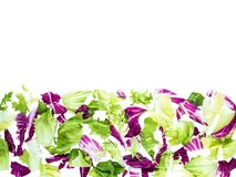 Horizontal border of mixed salad leaves top view. Horizontal border of green and purple radicchio, iceberg, endivia and lettuce salad leaves top view isolated on royalty free stock photos