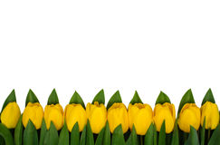 Horizontal border of yellow tulips. On white stock image