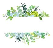 Horizontal botanical vector design banner. Horisontal botanical vector design banner. Baby blue eucalyptus, succulents, green hydrangea, wilflowers, various stock illustration