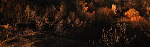 Horizontal brûlé panoramique Images libres de droits