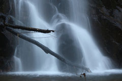 Horizontal branches over water stream motion Stock Images