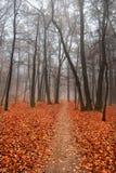 Horizontal brumeux d'automne Images stock