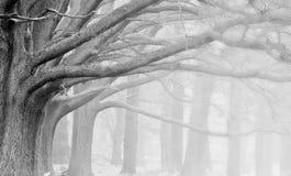 Horizontal brumeux d'automne d'automne de l'hiver de forêt image libre de droits