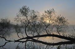 Horizontal brumeux de source Photographie stock libre de droits