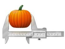 Horizontal caliper measures pumpkin fruit Royalty Free Stock Image
