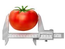 Horizontal caliper measures tomato fruit Stock Images