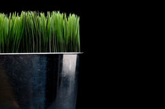 Horizontal close up of green grass in a metal cont Royalty Free Stock Images