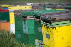 Horizontal close up of green and yellow beehives. Horizontal close up of some colored bee hives lined up in a green field with bees flying around Royalty Free Stock Photography