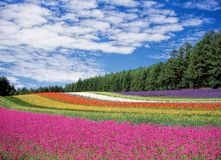 Horizontal coloré photo stock