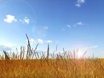 Horizontal coloré d'été Images libres de droits