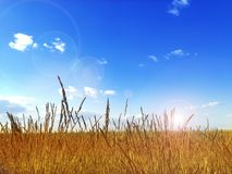 Horizontal coloré d'été Photo stock