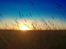 Horizontal coloré d'été Images stock