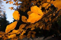 Horizontal coloré d'automne Photo stock