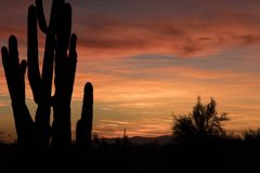 Sonoran Desert Sunset with Saguaro Cactus. Horizontal Color Image of the Sonoran Desert Sunset with Saguaro Cactus silhouetted against a golden sky stock photos