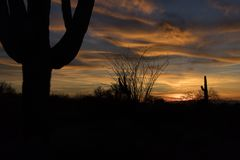 Sonoran Desert Sunset with Saguaro and Ocotillo Cactus. Horizontal Color Image of a Sonoran Desert Sunset with Saguaro and Ocotillo Cactus stock image