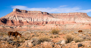 Horizontal Composition Scenic Desert Southwest Landscape Animal Royalty Free Stock Image