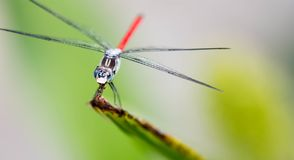 Horizontal cropped Colored close up head focus photo of a dragon royalty free stock image