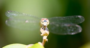 Horizontal cropped Colored close up photo of a dragon fly head f royalty free stock photos