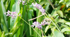 Horizontal cropped Colored photo of a hummingbird while looking stock images
