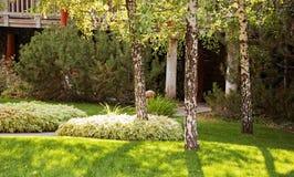 Horizontal d'été avec des arbres de cendre blanche image stock