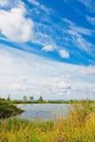 Horizontal d'été avec l'étang Photo stock