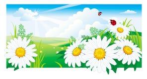 Horizontal d'été avec une camomille. illustration libre de droits