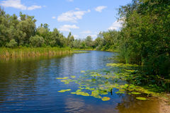 Horizontal d'été sur le fleuve photos libres de droits