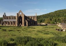 Horizontal d'abbaye de Tintern Image libre de droits