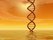 Horizontal d'ADN photo libre de droits